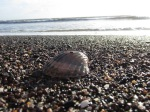 Shell by the sea