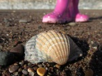 Shell with boots